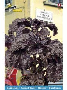 Basilicum a Foglia Violetta di Lattuga (slabladige violet paarse basilicum, zaad)