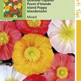 Papaver nudicaule excelsior (zaad Poppies, IJslandse klaproosjes)