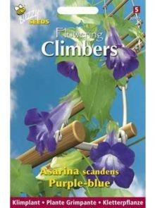 Asarina Scandens Blue (zaad Leeuwenmuil of Klimleeuwebek, Flowering Climbers)