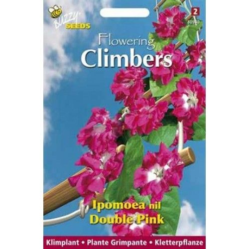 Ipomoea Nil Double Pink (zaad Klimmende Winde, dubbel roze, Flowering Climbers)