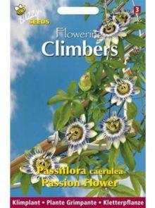 Passiflora caerulea (zaad paars-witte passiebloem, Flowering Climbers)