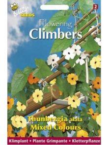 Thunbergia alata mixed (zaad Suzanne-met-de-mooie-ogen, Flowering Climbers)