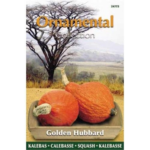 Pompoen Golden Hubbard (zaad Ornamental Collection)