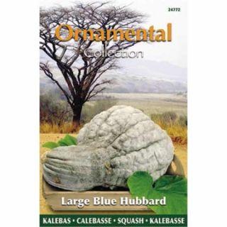 Pompoen Large Blue Hubbard (Blauwgrijs van kleur, zaad Ornamental Collection)