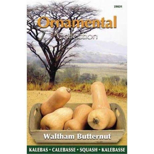 Eetbare Kalebas Waltham Butternut (zaad Ornamental Collection)