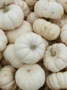 Eetbare witte pompoen Baby boo (zaad)