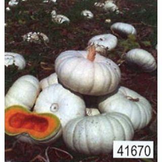 Eetbare witte pompoen Star 7020 F1 (pompoenen zaad)