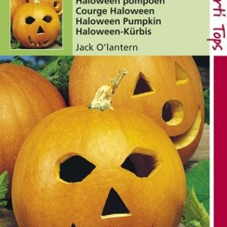 Pompoen Jack O'Lantern (Halloween Pompoenen zaad)
