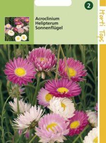 Acroclineum roseum  (Zomerstrobloem zaad)