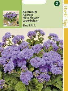 Ageratum mexicanum (Leverbalsum, Mexicaantje, zaad)
