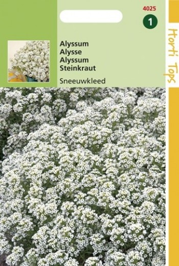 Alyssum procumbens (Rotsschild, Sneeuwkleed, zaad)