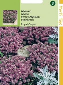 Alyssum Royal Carpet (Rotsschild, zaad)