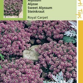 Alyssum Royal Carpet (Rotsschild, zaad)