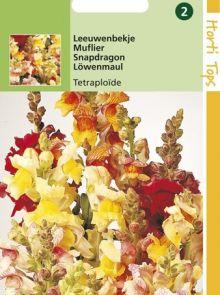 Antirrhinum tetraploide (Leeuwebekje, zaad)
