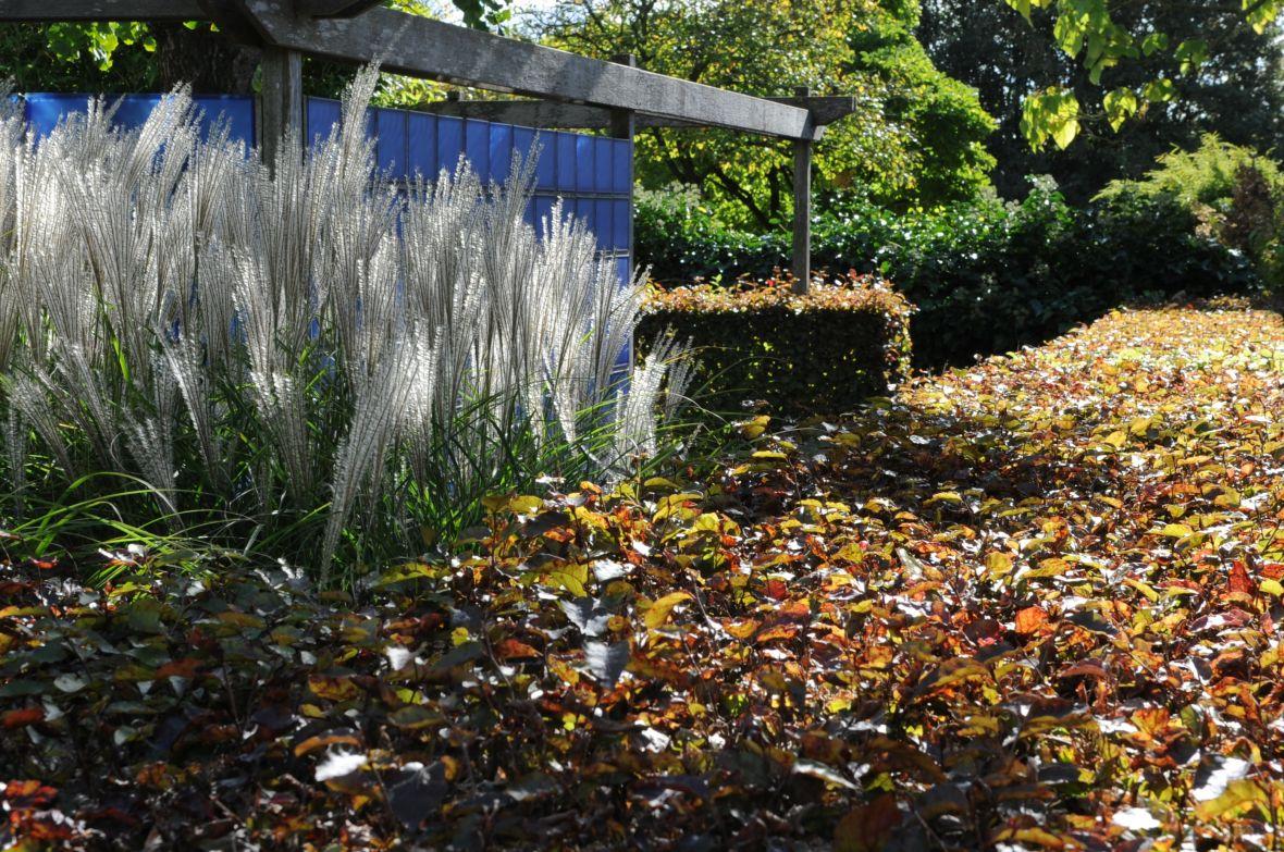 Tuin Hagen Soorten : Bekijk hagen in de praktijk de tuinen van appeltern