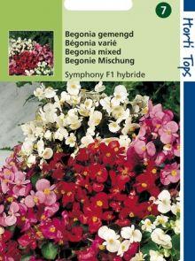 Begonia Symphonie (f1 zaad)