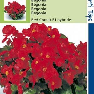 Begonia Rode Komeet (f1 hybride zaad)