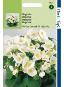 Begonia Witte Komeet (f1 hybride zaad)