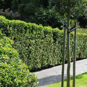 Bekijk hagen in de praktijk!
