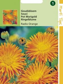 Calendula officinalis Radio (zaad goudsbloem, cactusbloemige)