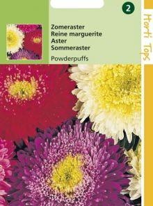 Callistephus chinensis boeket Powderpuffs (zaad zomeraster)
