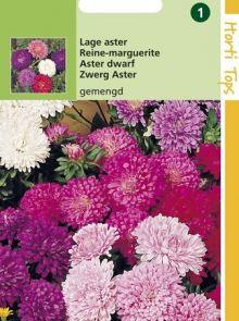 Callistephus chinensis dwerg-chrysanthemum (zaad zomeraster)