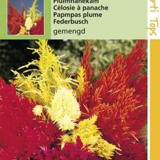 Celosia plumosa (zaad pluimhanekam)