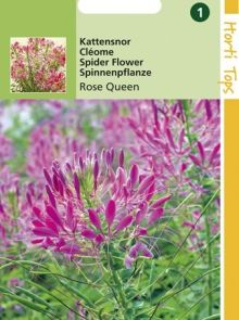 Cleome spinosa Rose Queen (zaad roze Kattensnor)