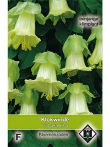 Cobaea scandens Alba (zaad roomwitte klokwinde)