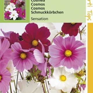 Cosmea bipinnatus Sensation (zaad grootbloemige Cosmos)