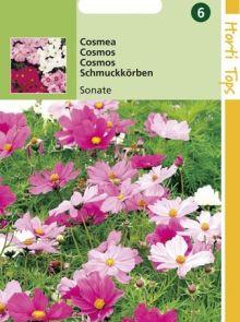 Cosmea bipinnatus Sonate (zaad perk Cosmos)