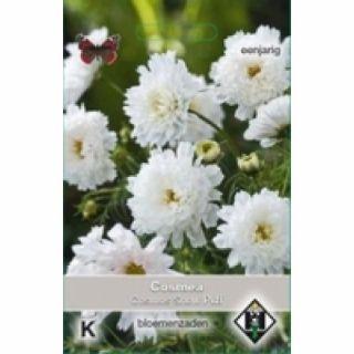 Cosmea Snow Puff (zaad witte Cosmos, half en geheel gevulde bloemen)