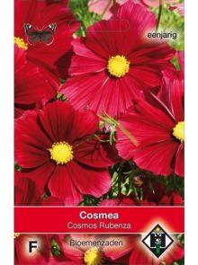 Cosmos bipinnatus Rubenza (zaad wijnrode Cosmos)