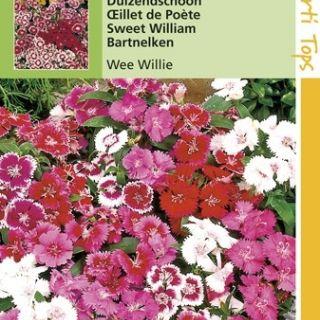 Dianthus barbatus Wee Willie (zaad Duizendschoon)