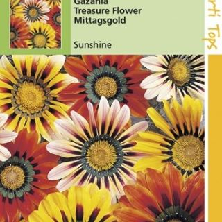 Gazania splendens Sunshine (zaad Treasure Flower, South African Daisy)