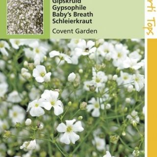 Gypsophila elegans Covent Garden (zaad wit Gipskruid)