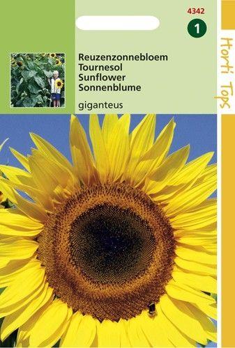 Helianthus annuus giganteus (zaad Reuzenzonnebloem)