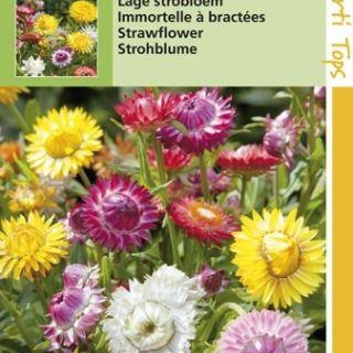 Helichrysum bracteatum Tom Thumb (zaad Lage strobloem gemengde kleuren)
