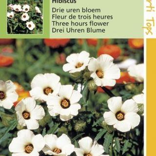 Hibiscus trionum (zaad Drie uren bloem)