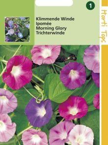 Ipomoea purpurea mengsel (zaad Klimmende winde, pronkwinde, dagbloem)