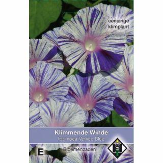 Ipomoea purpurea Venice Blue (zaad Klimmende Winde met wit met blauwe bloemen)