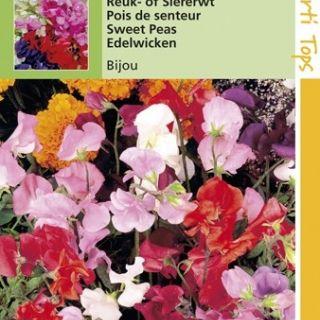 Lathyrus odoratus Bijou (zaad vroegbloeiende en laagblijvende Reuk- of Siererwt)