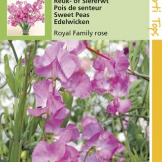 Lathyrus odoratus Royal Family rose (zaad Reuk- of Siererwt)