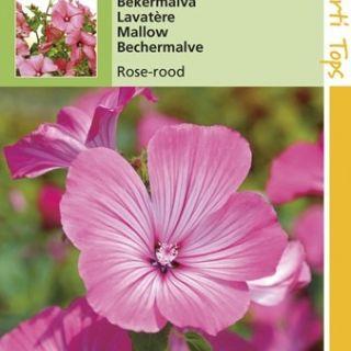 Lavatera trimestris rose-rood (zaad Bekermalva)