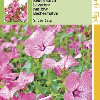 Lavatera trimestris Silver Cup (zaad Bekermalva reuzenbloemig rose)