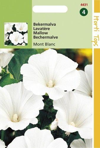 Lavatera trimestris Mont Blanc (zaad Bekermalva, zuiver wit)