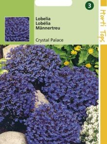 Lobelia Crystal Palace (zaad donkerblauwe Lobelia)