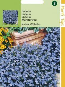 Lobelia Kaiser Wilhelm (zaad Gentiaanblauwe Lobelia)