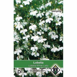 Lobelia erinus White Lady (zaad witte Lobelia)