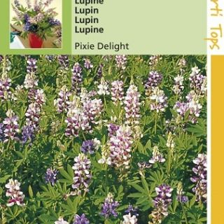 Lupinus nanus Pixie Delight (zaad eenjarige lupine, gemengd)